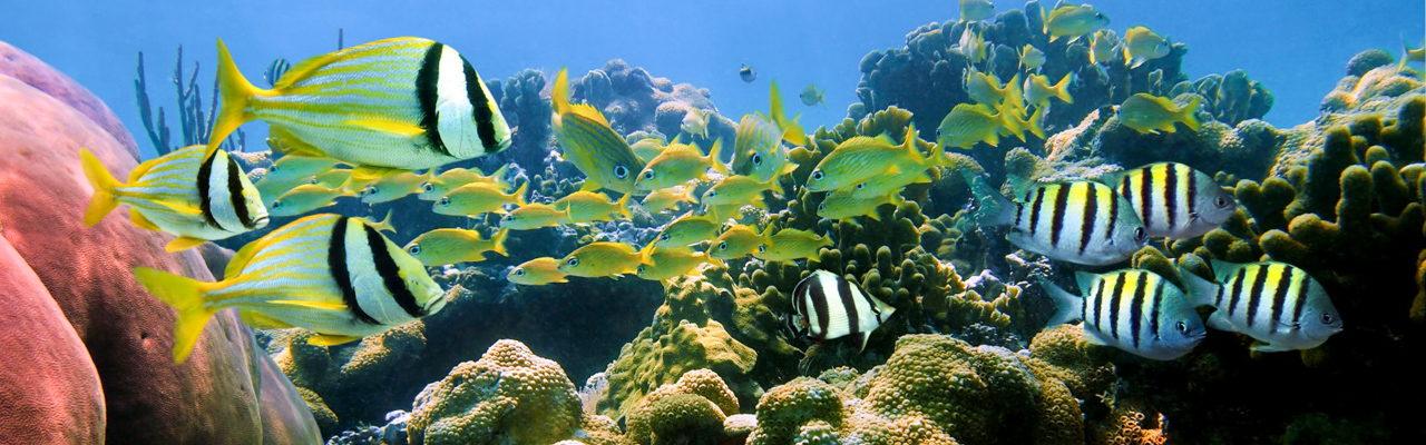 Scuba Diving Tours Phuket 17