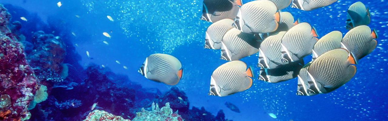 Scuba Diving Tours Phuket 26