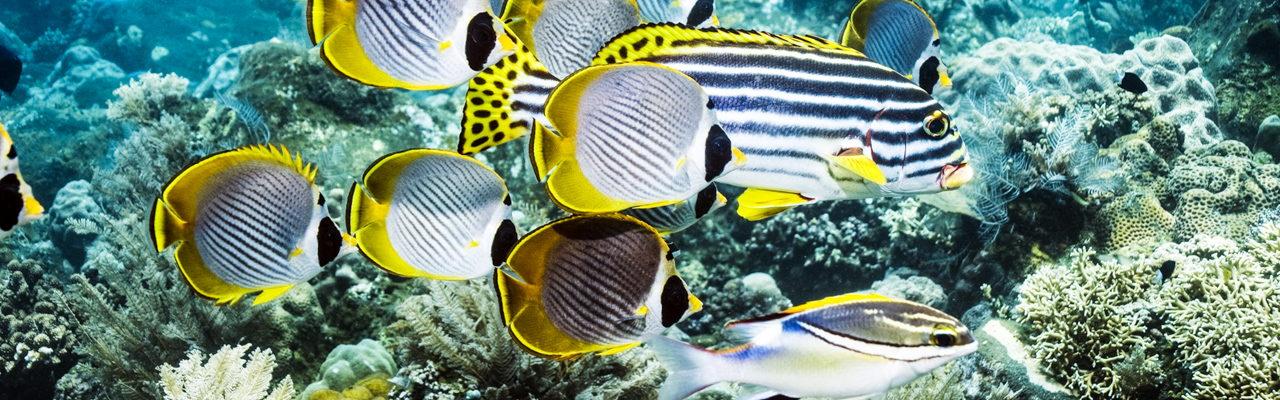 Scuba Diving Tours Phuket 30