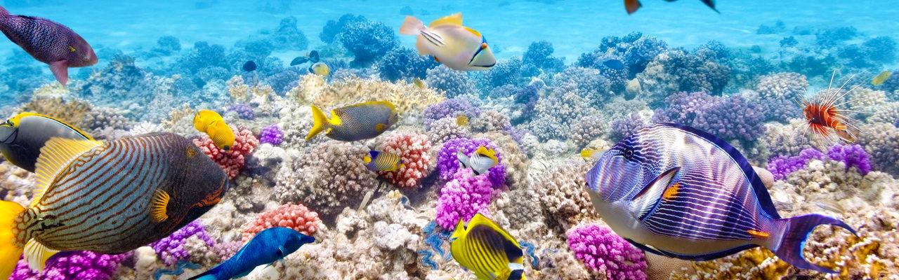 Scuba Diving Tours Phuket 45