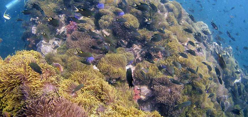Anemone Reef diving