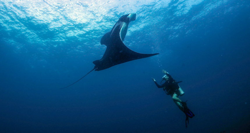 Hin Daeng Diving - Diver with Manta Ray