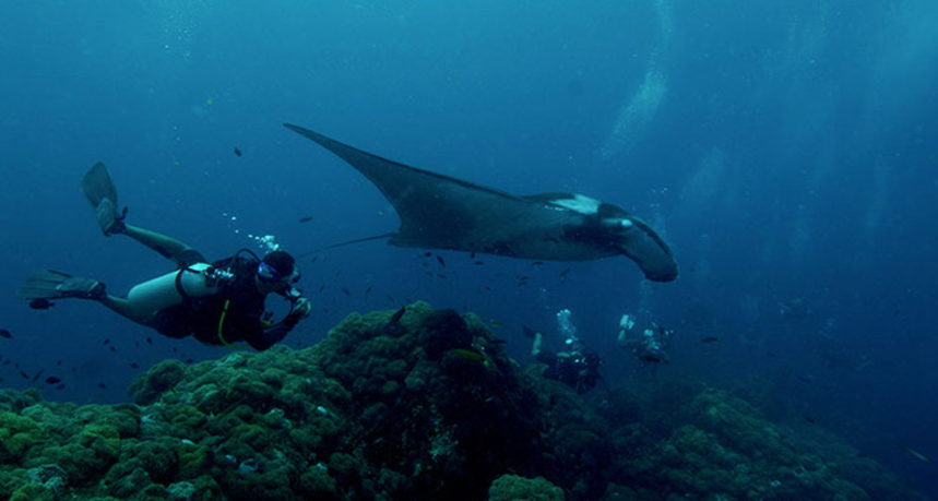 Hin Muang Diving - Manta Ray