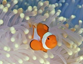 Phuket Dive trips - Racha Islands dive sites touch menu