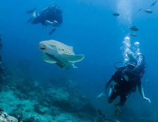 Phuket Dive trips - Shark point and Anemone Reef dive sites touch menu