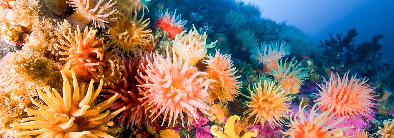 Scuba Diving Lessons - 24