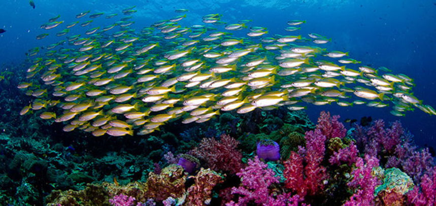 Shark Point diving - school of reef fishes