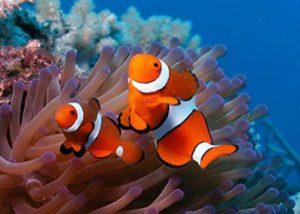 Cours de spécialité PADI - Photo numérique sous-marine