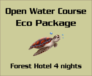 Cours PADI Open Water - Forfait Eco